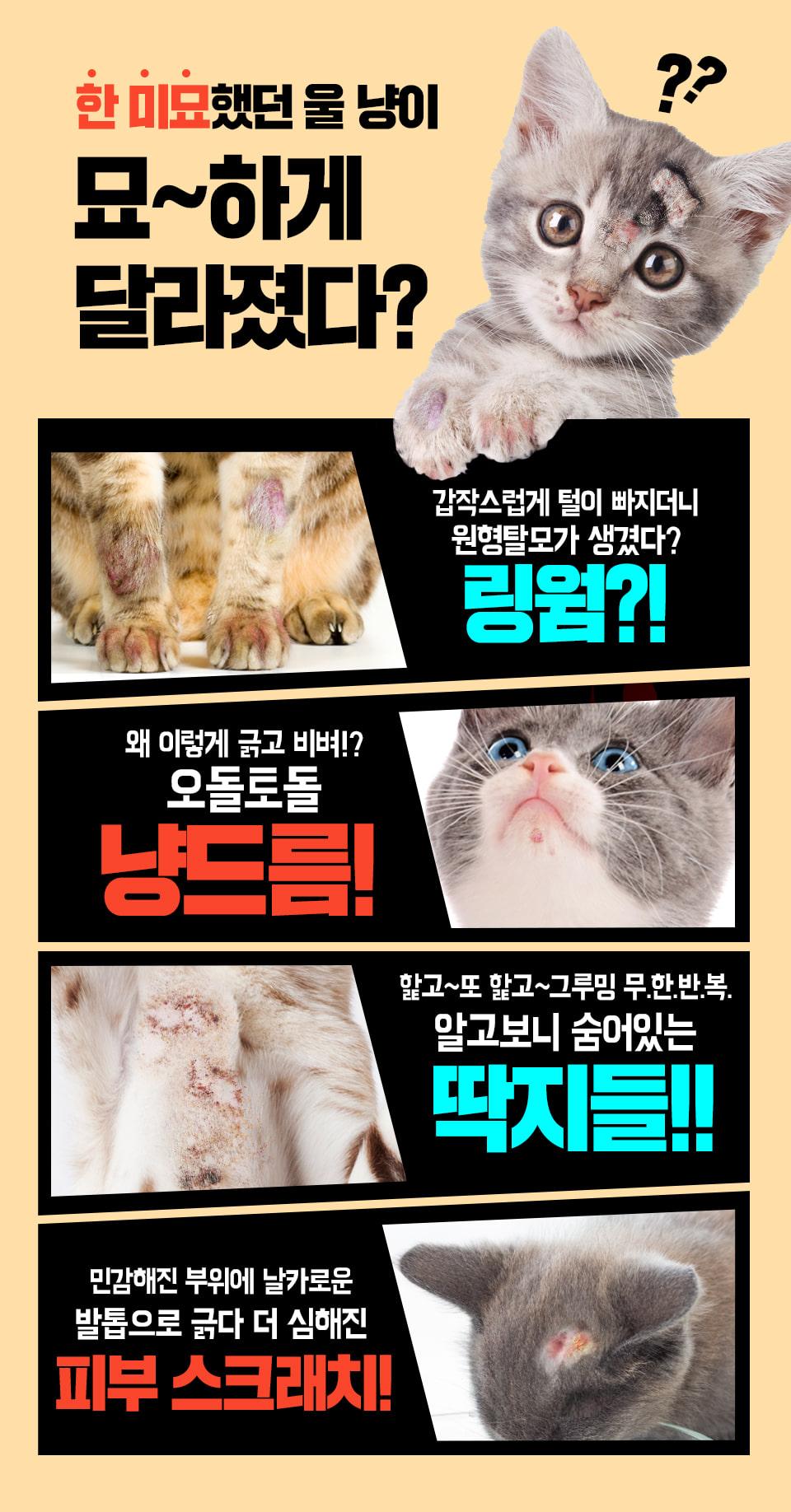 냥스팟 고양이전용 긴급진정템14,900원-울지마마이펫펫샵, 고양이용품, 화장실/위생용품, 탈취/소독바보사랑냥스팟 고양이전용 긴급진정템14,900원-울지마마이펫펫샵, 고양이용품, 화장실/위생용품, 탈취/소독바보사랑